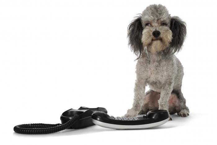 Dzīvnieku dienesta tālrunis