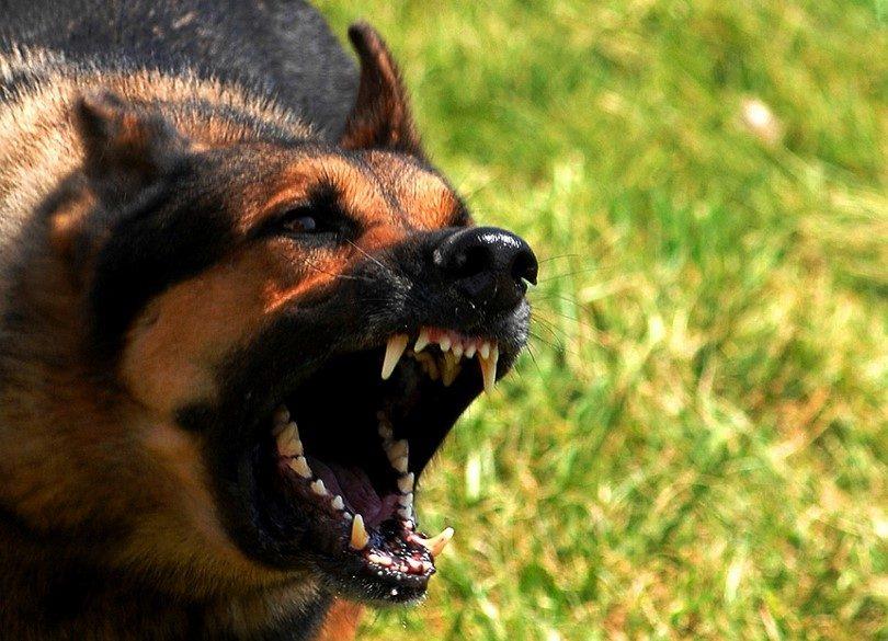 Rīcība suņa uzbrukuma gadījumos