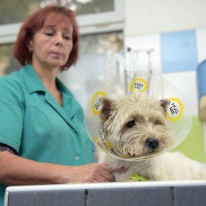 SIA Dr.Beinerts Imantas veterinārā klīnika 0
